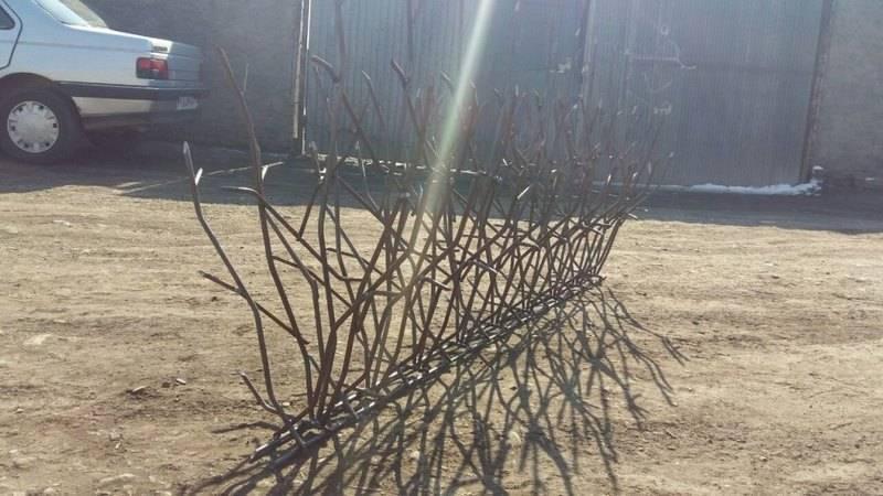 حفاظ شاخ گوزنی در کارگاه